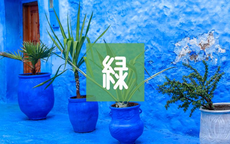 観葉植物・盆栽ギフト