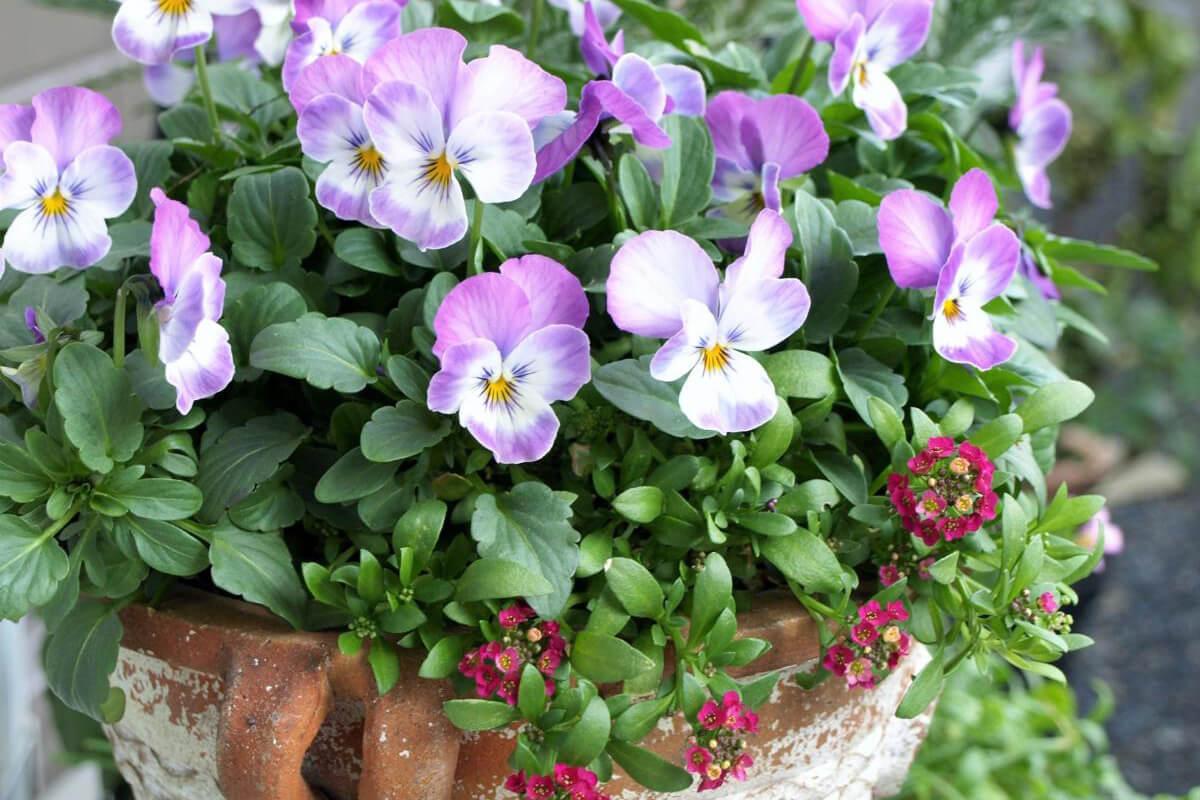 【父の日ギフト】鉢花