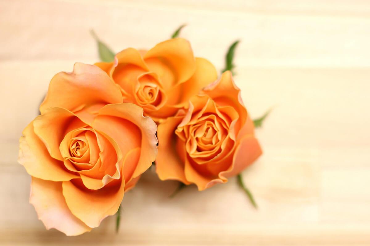 【父の日ギフト】バラ(オレンジ)